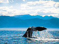 11 day South Island Experience Tour - click for more information